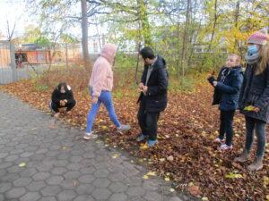 Wir suchen Blätter